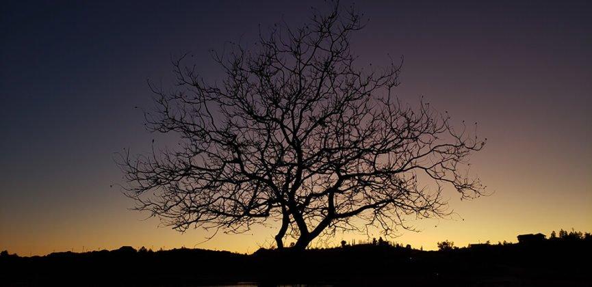 Tree against twilight